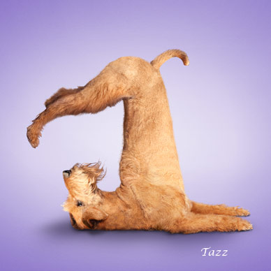 Dog Busy In Yoga