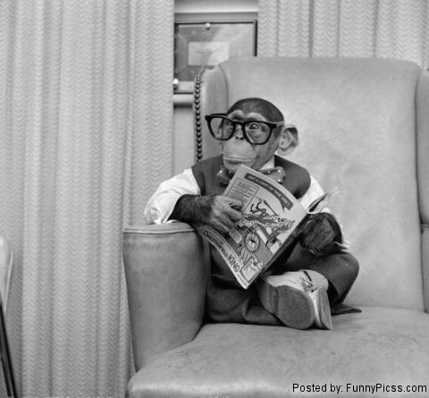Monkey Reading Like a Boss