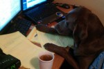 Dog Busy in Work