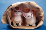 Kittens Hiding