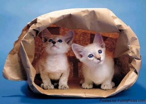 Kittens-Hiding