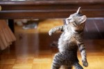 Kitten Strutting