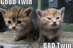 Good or Twin or Bad Twin