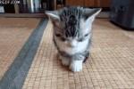 sleepy-cat-