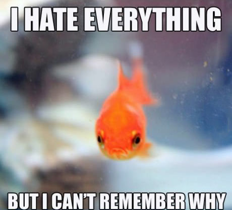 this fish hate everything